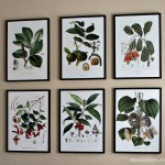 vintage botanical prints framed in inexpensive Ikea Ribba frames by AttaGirlSays.com