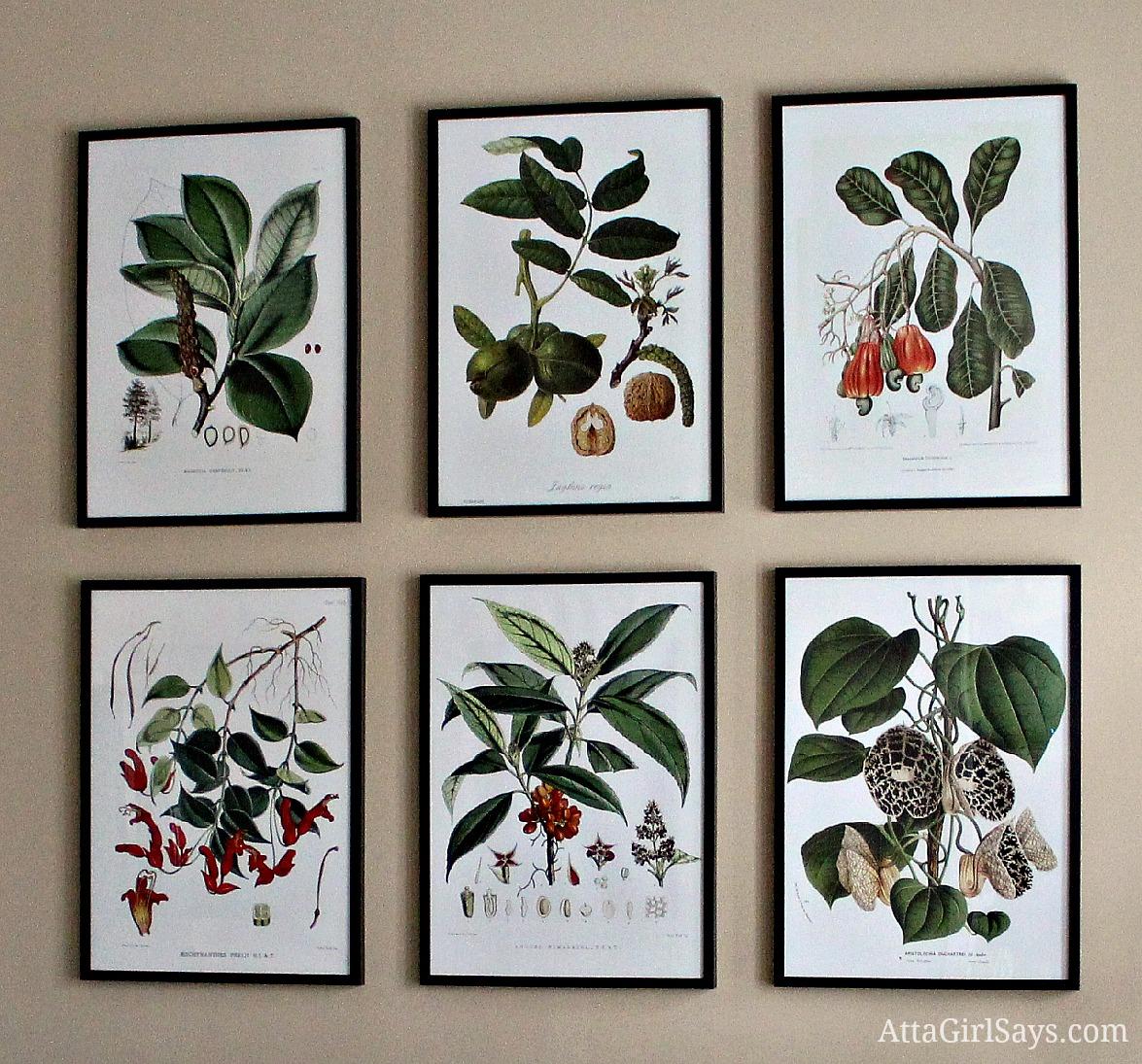 Botanical Prints Dining Room