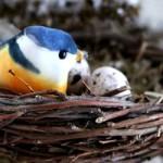 bird in branch featured
