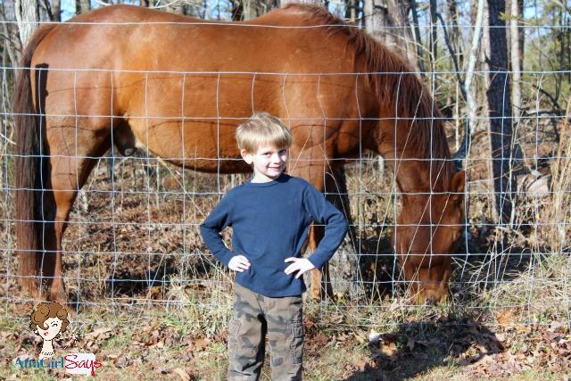 horses in the backyard