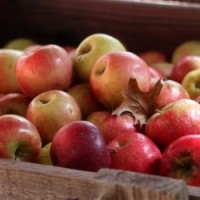 N.C. Heirloom Apples