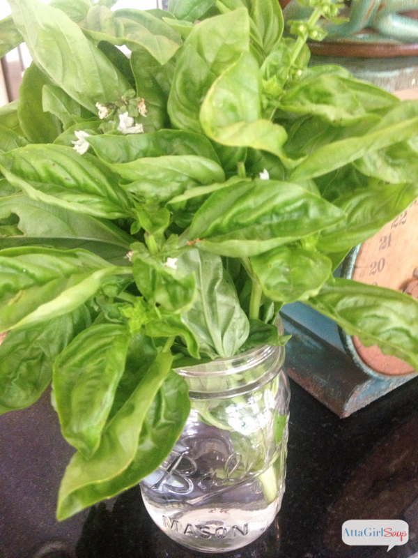 fresh basil in a glass jar