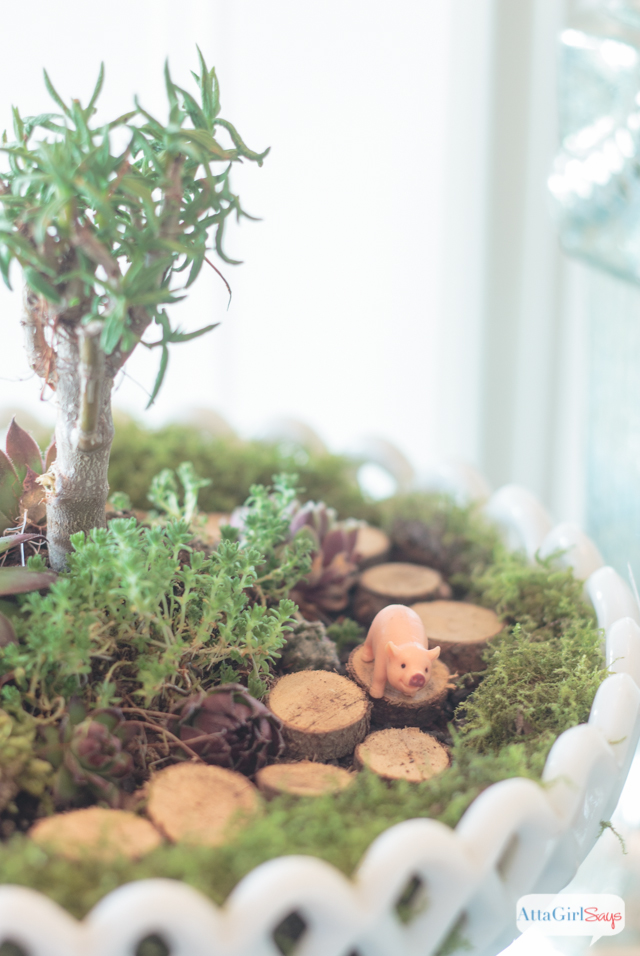 Are these miniature pigs roaming aroudn this succulent dish garden just the cutest thing ever?