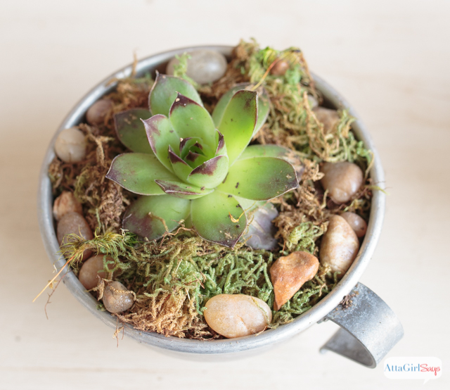 Use Unique, Upcycled Containers, To Create Your Own Succulent Dish Garden.  These Tin
