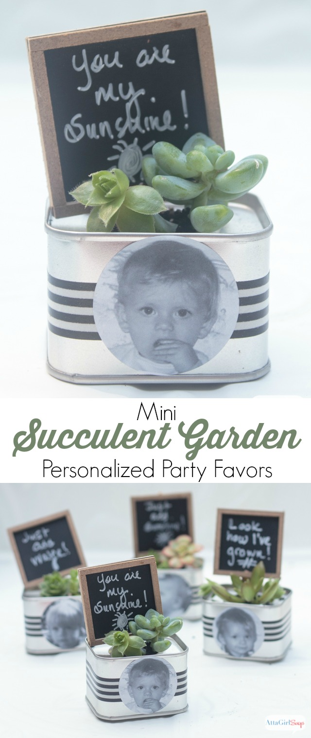 A collage photo showing a collectino of miniature succulent gardens planted in metal tins that have been decorated with black-and-white striped washi tape and black-and-white photo stickers. Mini chalkboard frames are also planted in each succulent garden.